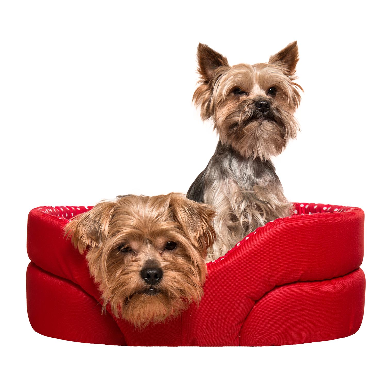 Pelech pro psy, no. 7, červený s puntíky, vel.2